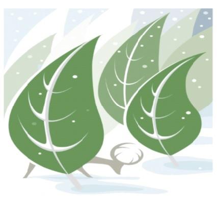 大雪(たいせつ).jpg